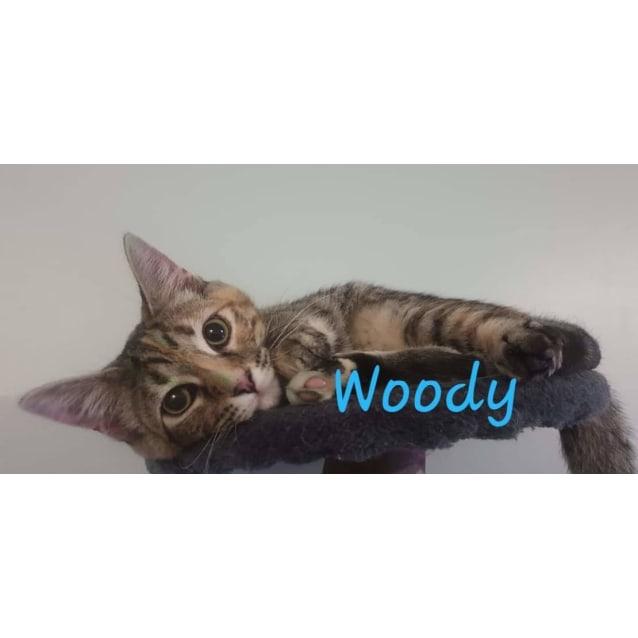 Photo of Woody