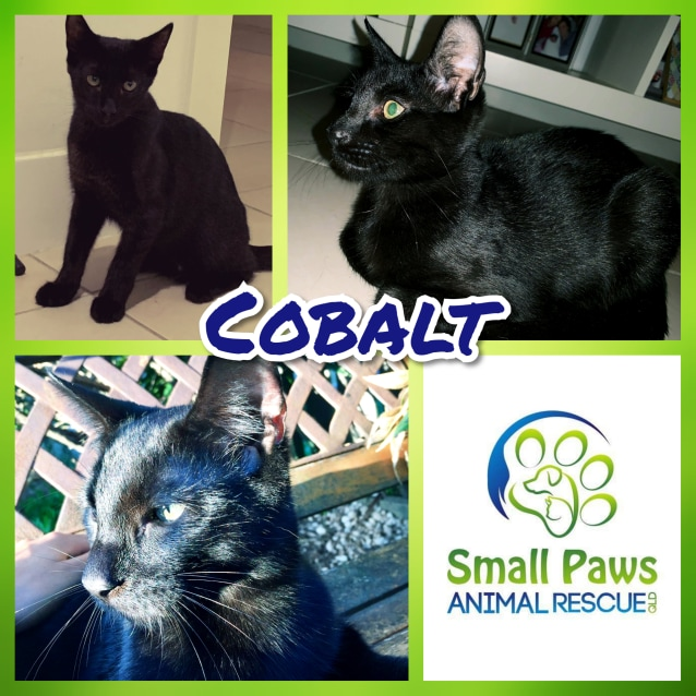 Photo of Cobalt