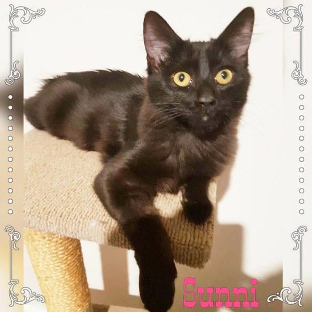 Photo of Sunni