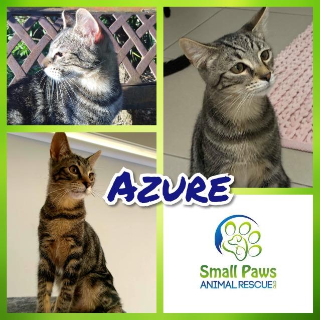 Photo of Azure