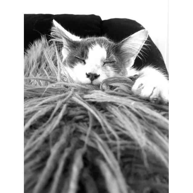 Photo of Pabbie