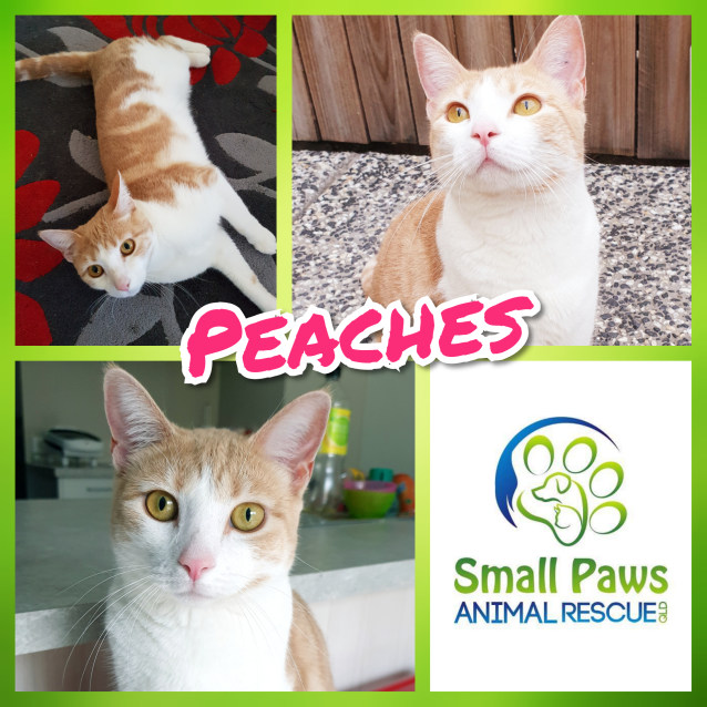 Photo of Peaches