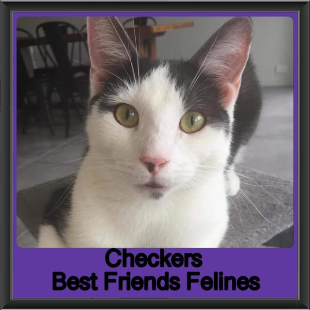 Photo of Checkers