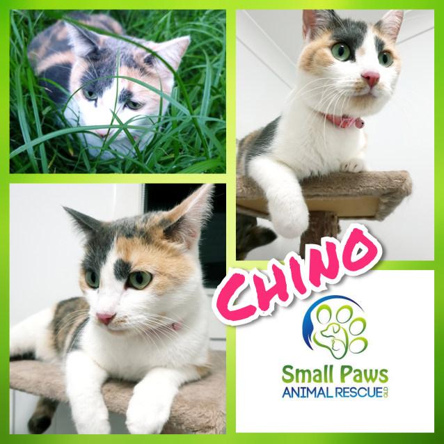 Photo of Chino