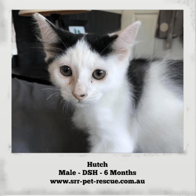 Photo of Hutch