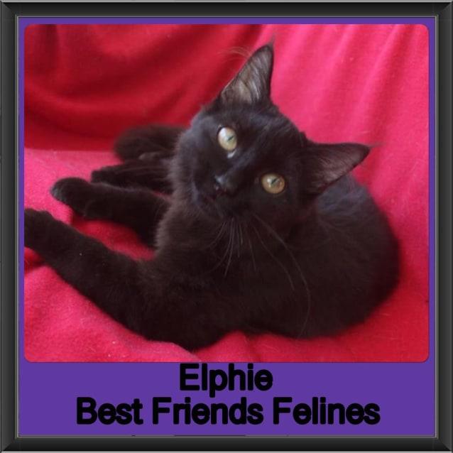 Photo of Elphie
