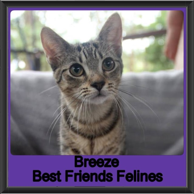Photo of Breeze