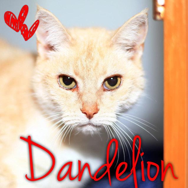 Photo of Dandelion   Located In Bulleen