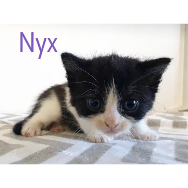 Photo of Nyx