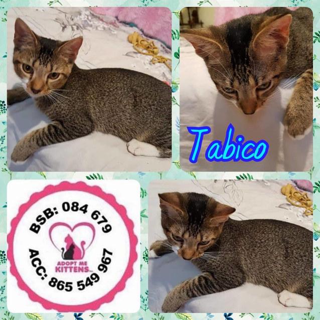 Photo of Tabico