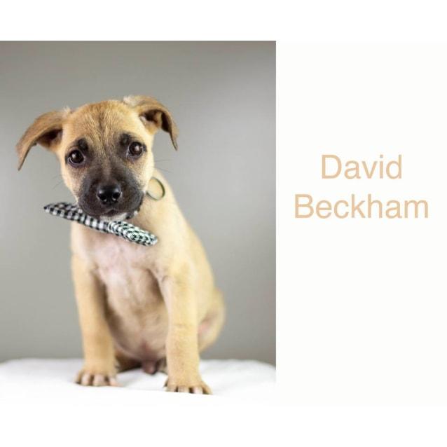 Photo of David Beckham (Becks)
