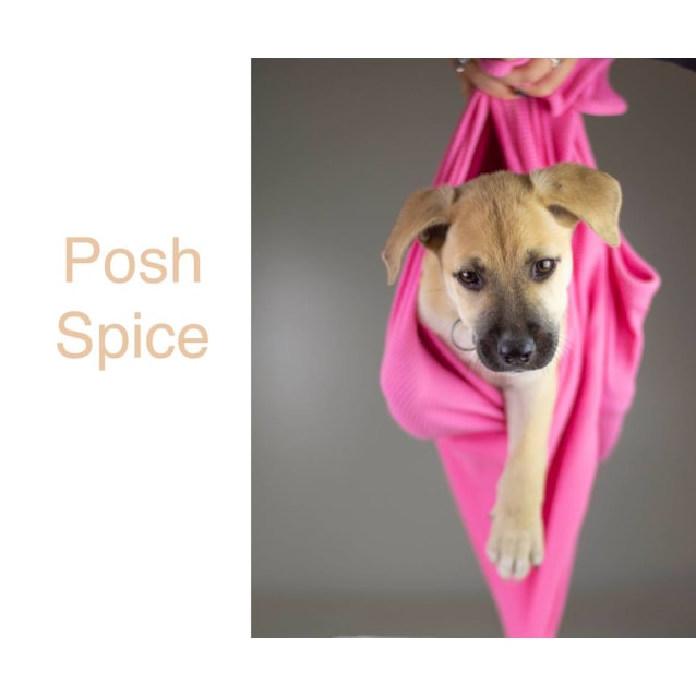Photo of Posh Spice