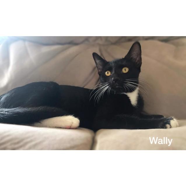 Photo of Wally