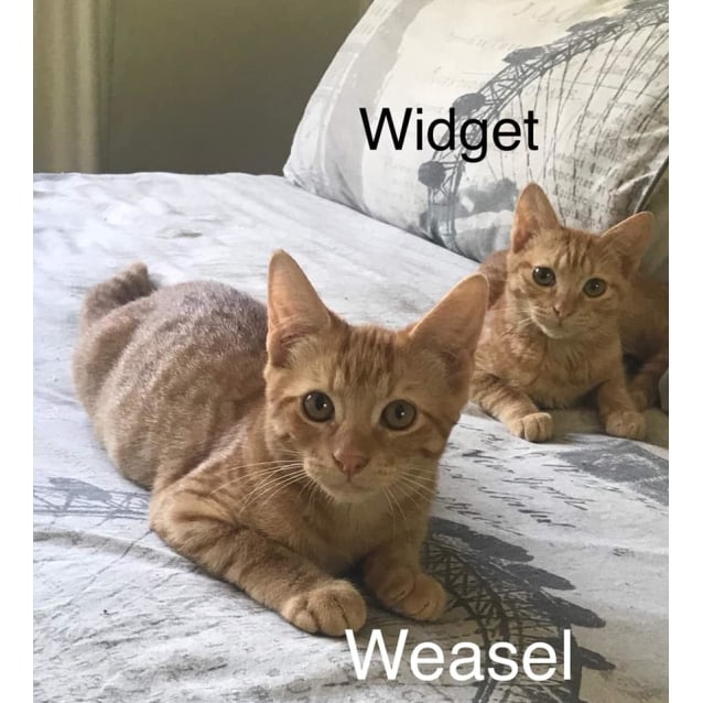 Photo of Weasel