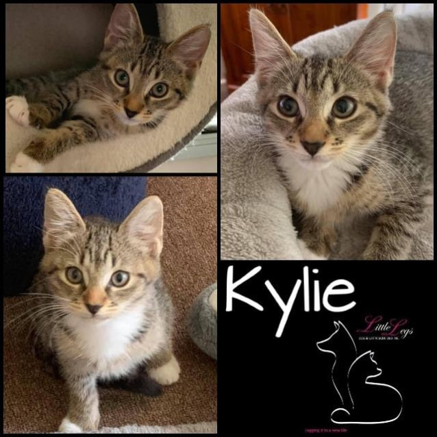 Photo of Kylie