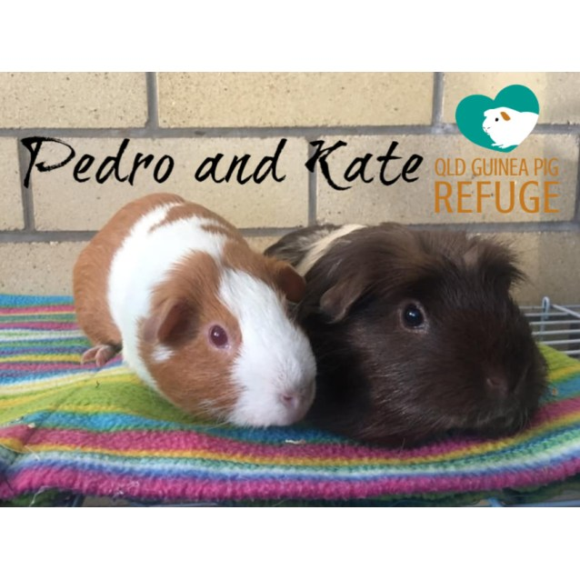 Photo of Pedro (Desexed Male) And Kate