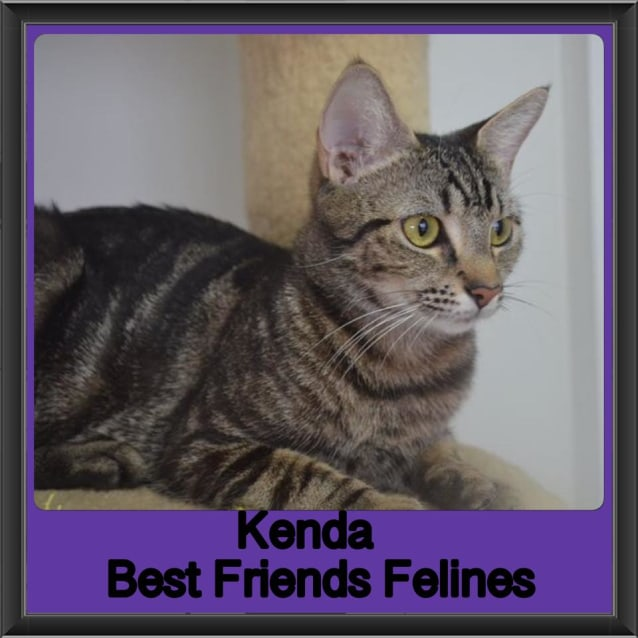 Photo of Kenda