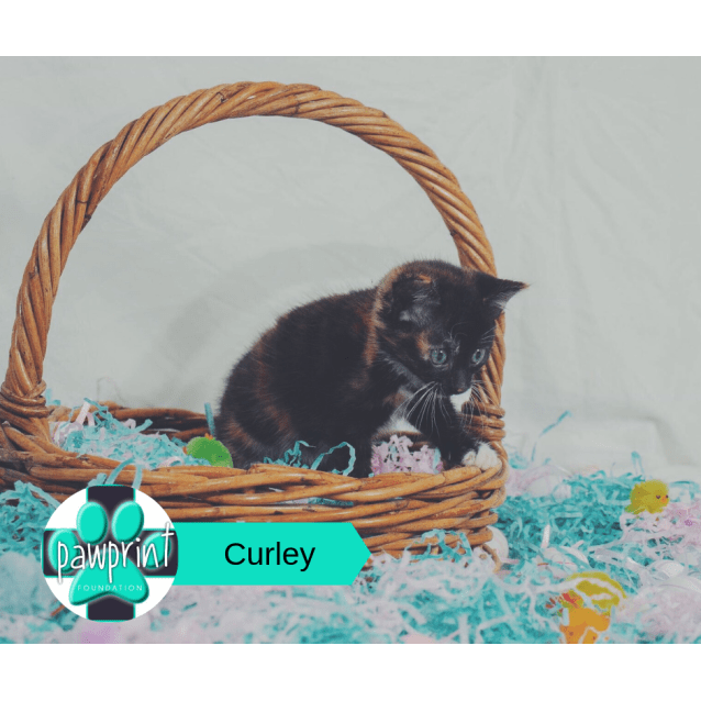 Photo of Curley