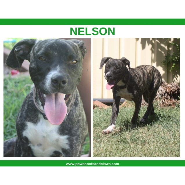 Photo of Nelson