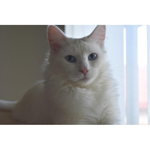 Photo of 💙Sapphire A True Gem   Deaf💙