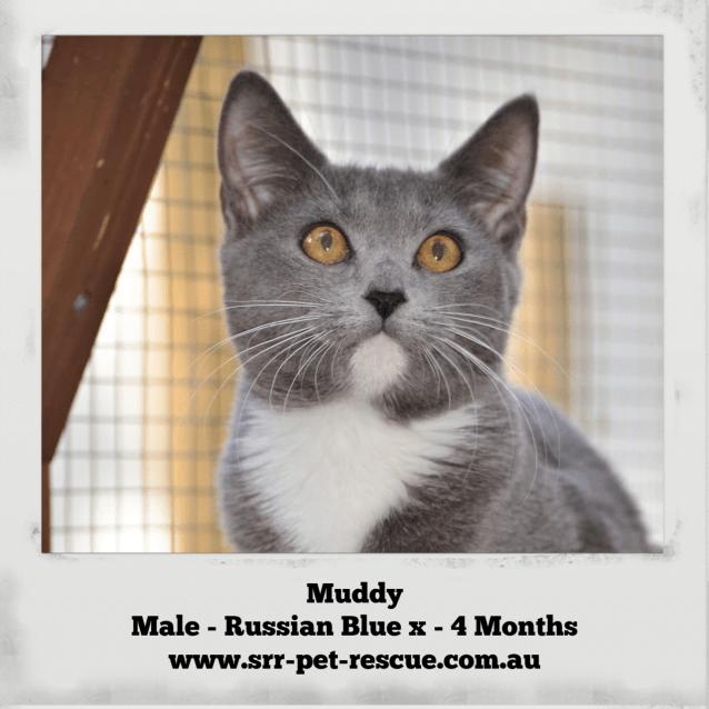 Photo of Muddy
