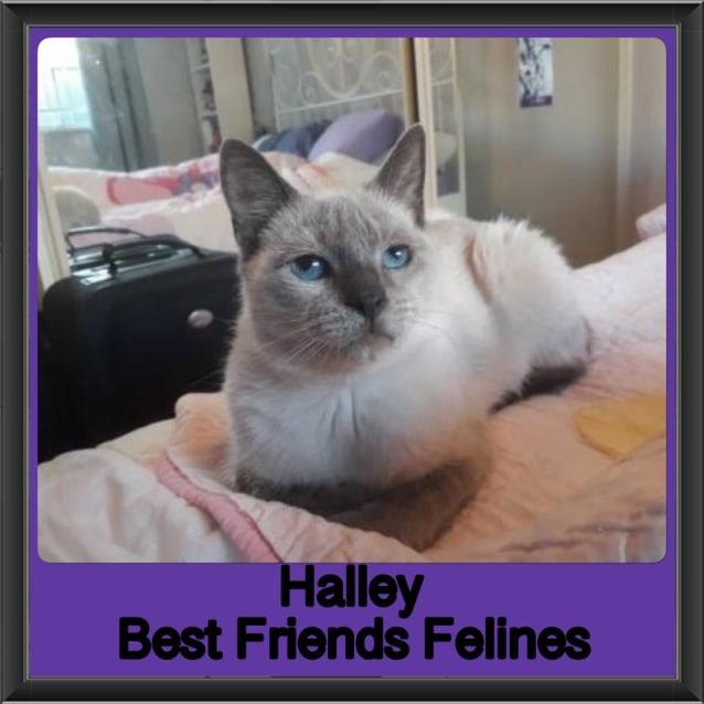 Photo of Halley
