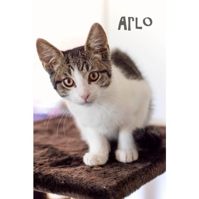 Photo of Arlo