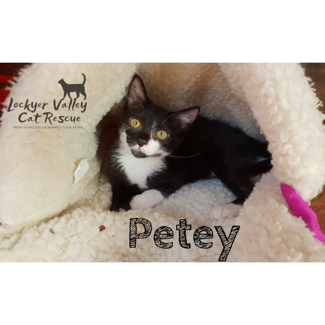Photo of Petey