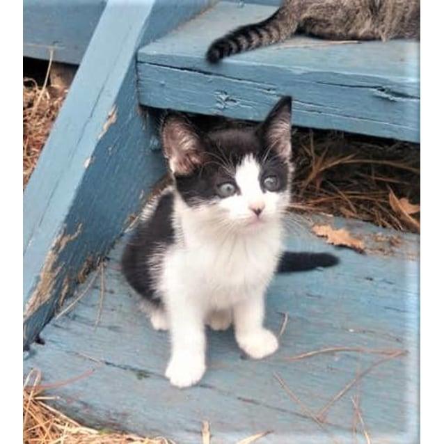 Photo of Brodie   Kitten Cutie!