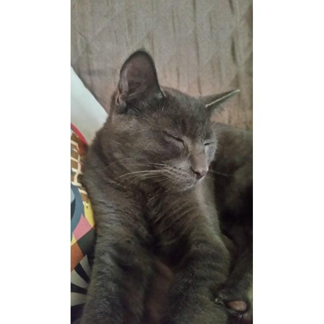 Photo of Max(Iemoo)