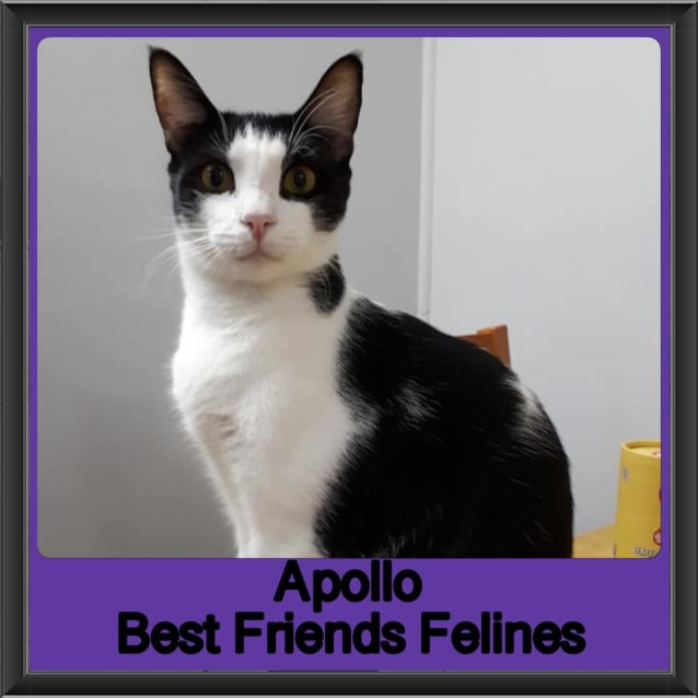 Photo of Apollo