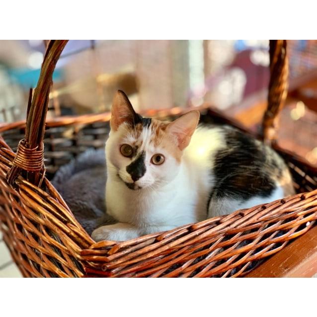 Photo of Little Stunner Mini!