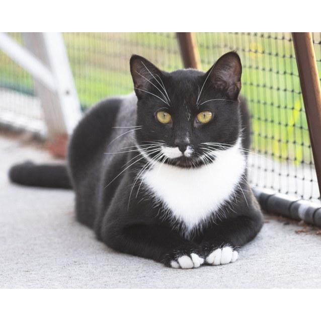 Photo of Oswald (91662)