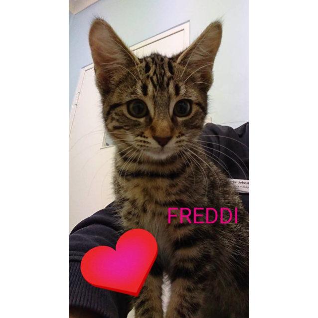 Photo of Freddi