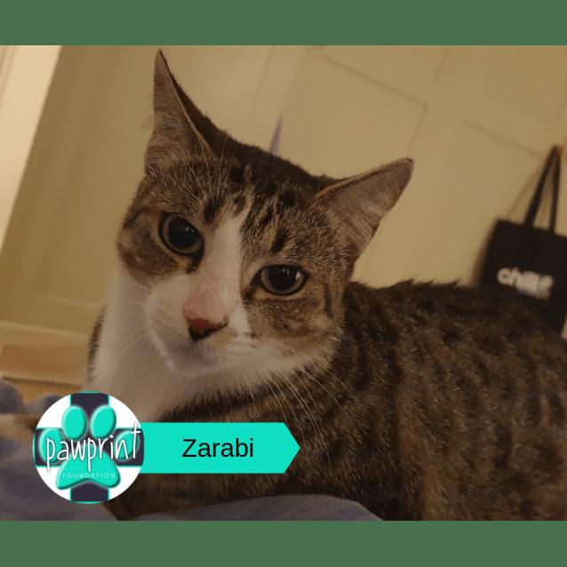 Photo of Zarabi