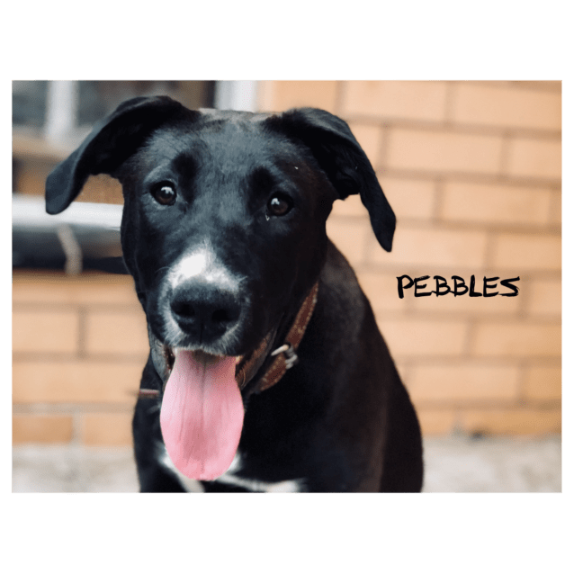 Photo of Pebbles