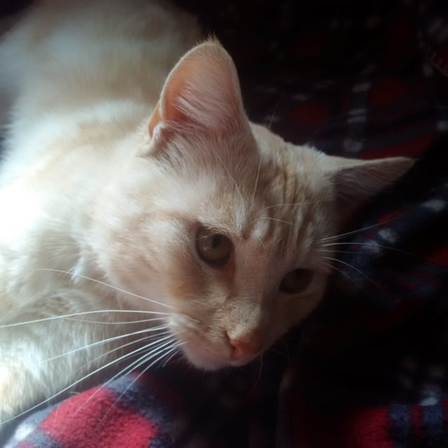 Photo of Pinky (Located In St Albans)