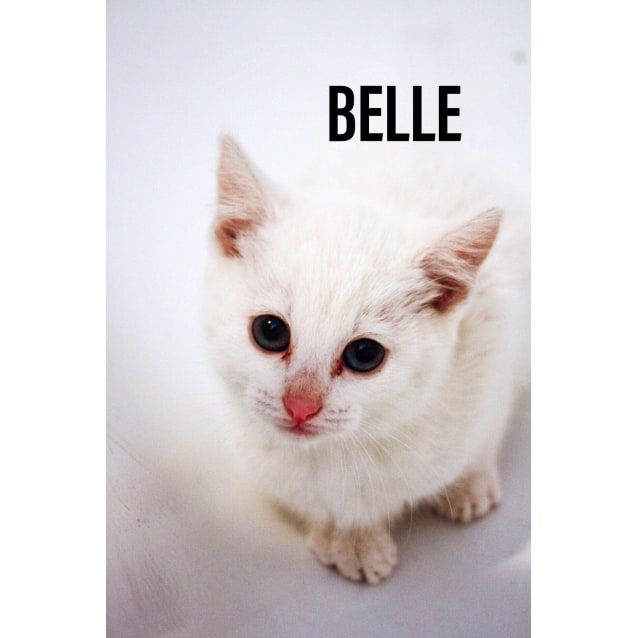 Photo of Belle