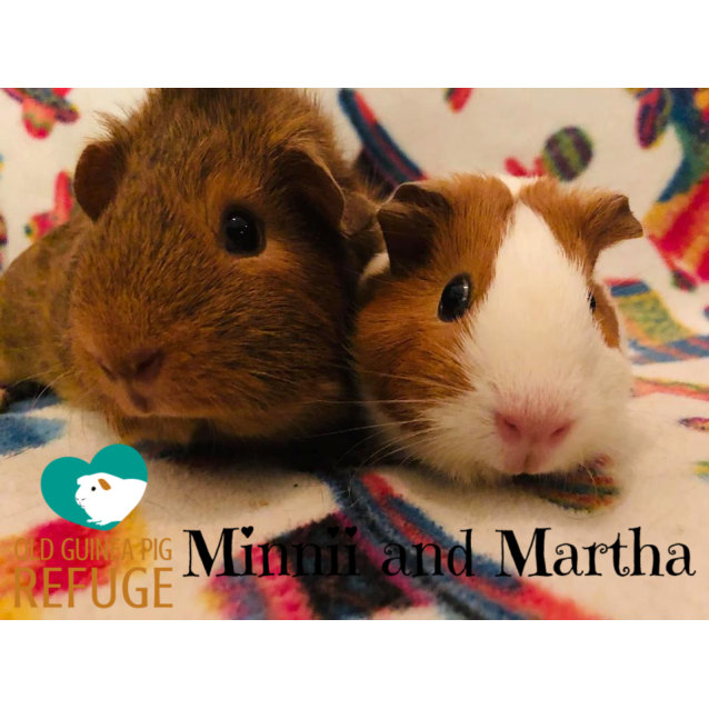 Photo of Minnii And Martha