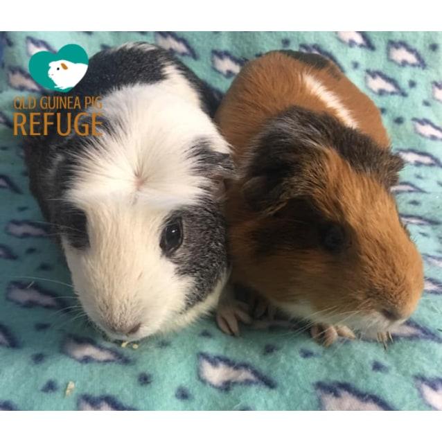 Photo of Lamington And Satay
