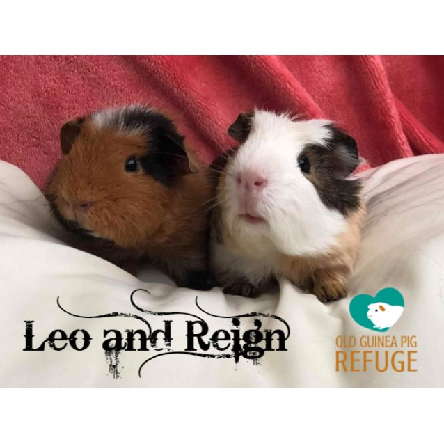Photo of Leo And Reign (Not Suitable For Children)