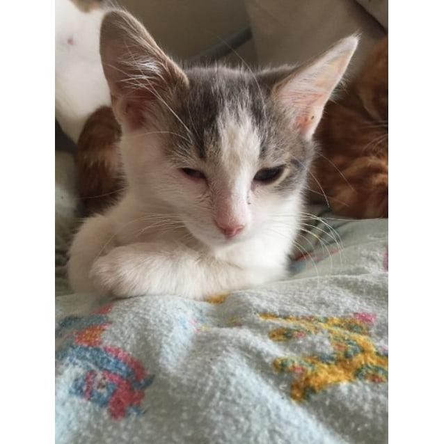 Photo of Clarabella