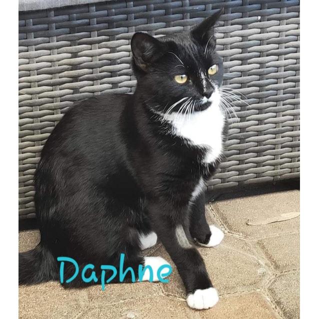 Photo of Daphne