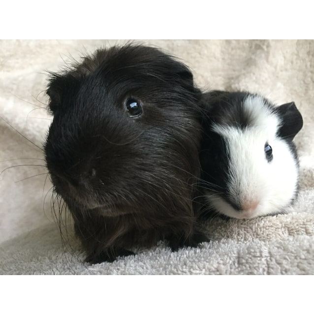 Photo of Bradley And Pepe