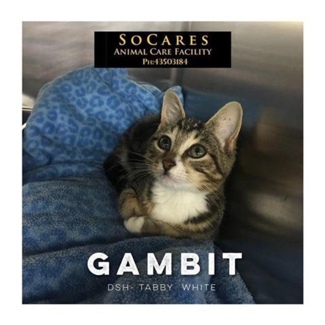 Photo of Gambit