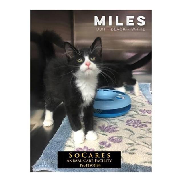 Photo of Miles