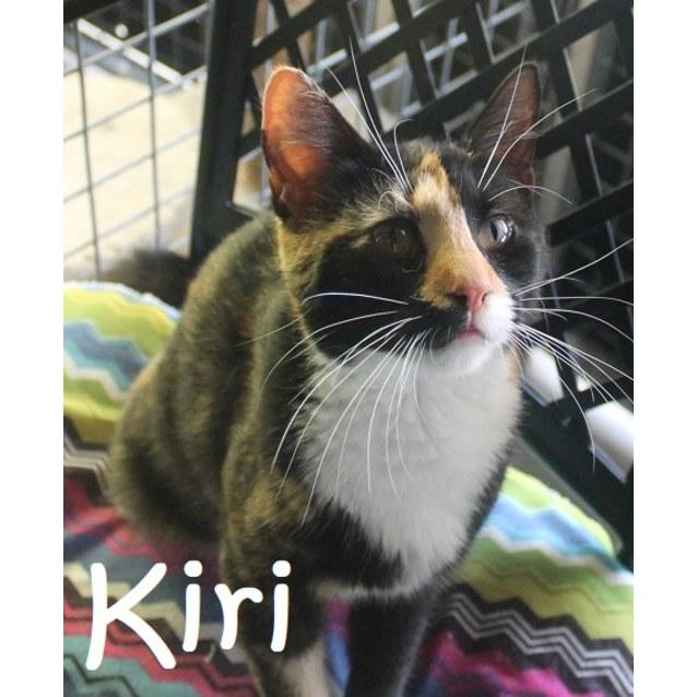 Photo of Kiri