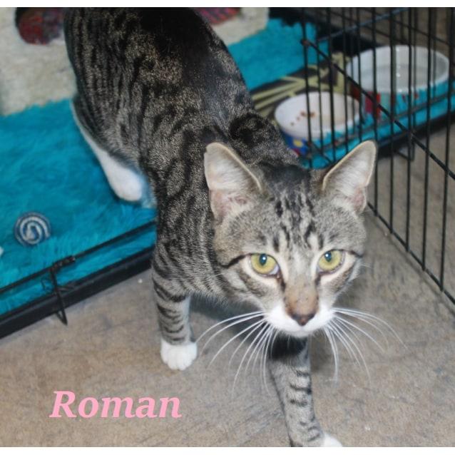 Photo of Roman