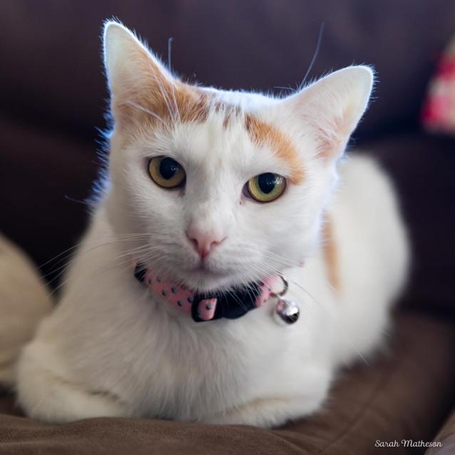 Photo of Ac1156   Mabel