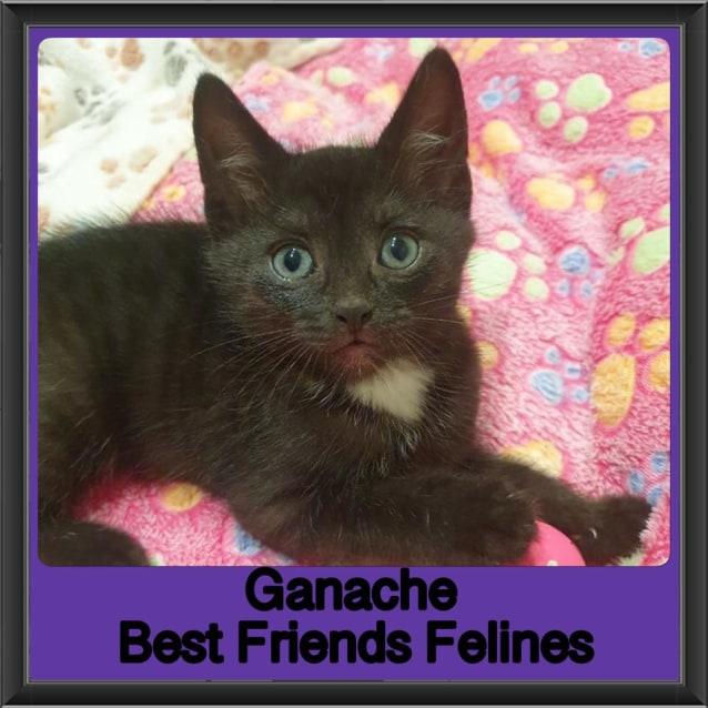 Photo of Ganache